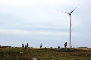 horse-turbine-pic